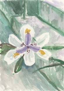 Still Flower